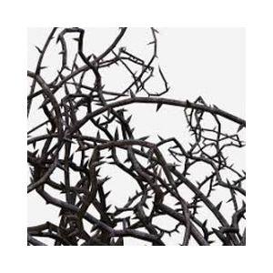 Fiche de la radio The Realm of Thorns